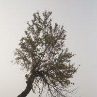 В тумане... :: Людмила Синицына