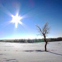 Ясный декабрьский денек :: Константин Филякин