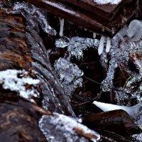 Кристаллы природы :: Василек photo