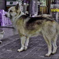 Я не трус, но Я боюсь-из серии Кошки очарование мое! :: Shmual Hava Retro
