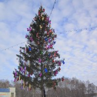 Наша ёлка высока , достаёт  до небушка )) :: Мила Бовкун