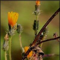 последние цветы :: victor leinonen