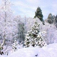 Зима :: Николай Гренков