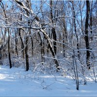 Зима в начале декабря ...3 :: Тамара (st.tamara)
