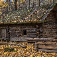 Лесной осенний пейзаж :: Александр