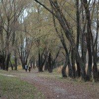 Прогулка в октябре :: Валентина Данилова