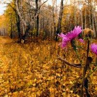 Последний цветок осени :: Константин Филякин