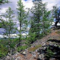 Восточный склон Полярного Урала :: Tata Wolf
