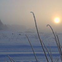 Туманный день :: Павлова Татьяна Павлова