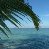 Тропики. :: Чария Зоя