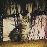 Мусьена новогодняя :: Света Кондрашова