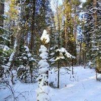 Зимний лес :: Александр Рождественский
