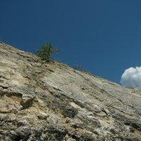 И на камнях растут деревья . :: Андрей Rudometov