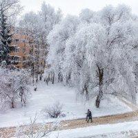 Из моего окна ива красная видна. :: Евгений Никифоров