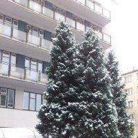 и к нам дошла зима :: Ольга Богачёва