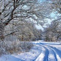 Дороги зимней колея... :: Лесо-Вед (Баранов)