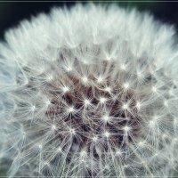 Волшебный шар :: Swetlana V