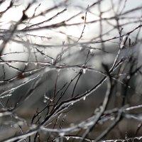 Зима? :: Helen M.