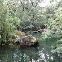 Старый пруд :: Ирина Н