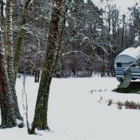 Зимний лес :: Георгий Столяров