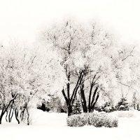зима :: Виталий Исаев