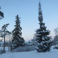 Карельская зима :: Людмила