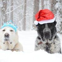 С Новым годом,однако:))) :: Рудаков Сергей