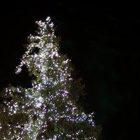 зимние светлячки.... :: Алексей Бортновский