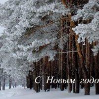 С Новым годом! :: Сергей Кузнецов