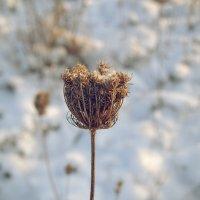 Мороз и солнце :: Виктория Олейник