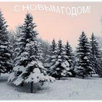 И профессионалов и любителей поздравляю с Новым годом! :: Александр Бурилов