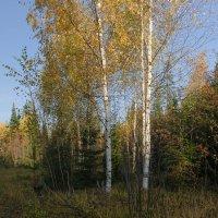 Фрагмент осеннего леса :: Валентин Котляров