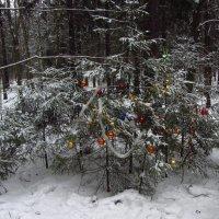 01 января 2013 - ёлка в лесу :: Андрей Лукьянов