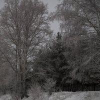 замечательное утро 1 января 2015года :: Дмитрий Беляков