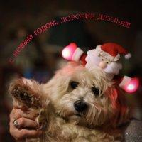 С Новым Годом! :: Larisa Ulanova