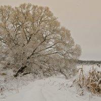Чудо-дерево. :: Виктор Евстратов