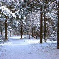 Зима :: Иван Клещин