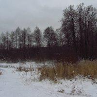 IMG_8994 - Новый 2015 год :: Андрей Лукьянов
