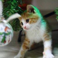 Рыжику на новый год веселее всех!))) :: Ольга Нестеренко