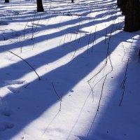 Разлинованная  зима... :: Валерия  Полещикова
