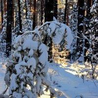 Задумавшись о истинах лесных... :: Лесо-Вед (Баранов)