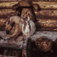 Кролики :: Михаил