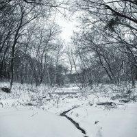 Зима :: Svetlana Sneg