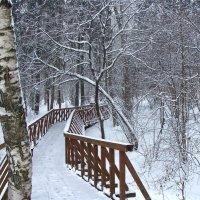 Зима. :: Larisa Simonenkova