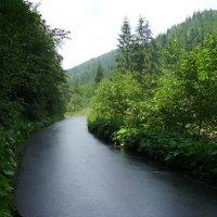 В  Карпатском  лесу :: Андрей  Васильевич Коляскин