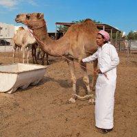Camels :: Наталья Виноградская