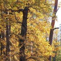 Золотая осень :: Алексей Агалаков