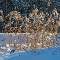 Посреди зимы :: vladimir Bormotov