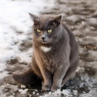 Зимний Коте :: Александр Ребров