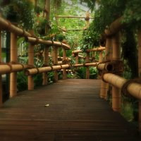 В тропической оранжерее :: Alexander